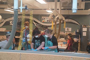 South Dakota Mines Summer Camp Fossils And Paleontology