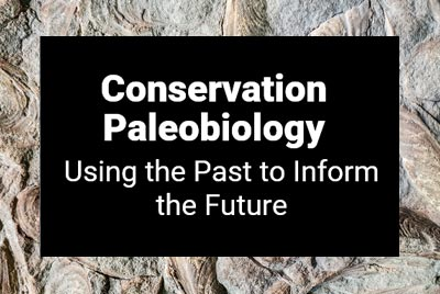 Online Exhibit Conservation Paleobiology