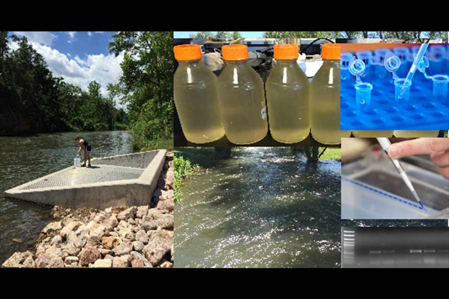 SD Mines Researchers Pioneer New Testing Method That Identifies Pathogenic Potential in South Dakota Waterways