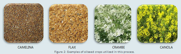 SunGrant Oilseed Crops